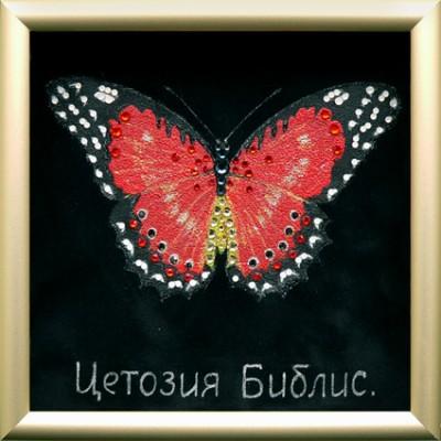 """Бабочка """"Библис"""""""