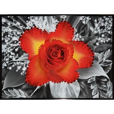 Контраст цвета-Чайная роза