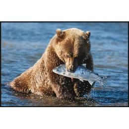 Медвежий улов